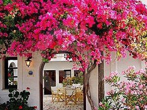 landscaping styles, Mediterranean landscaping styles ideas